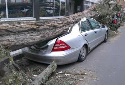 garaz_3_drzewo_400